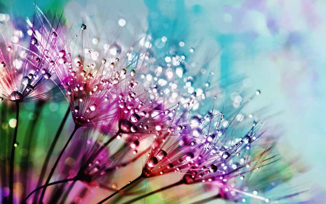 closeup photography of purple silk flowers with dewdrops